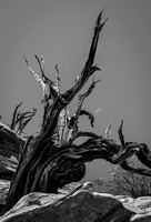 Dead Tree and Moon